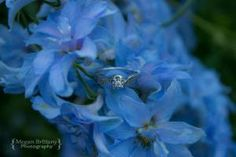 #engagement #engagementshoot #love #wedding #Winnipeg #meganbrittanyphotography Engagement Shoots, Engagement Rings, Wedding Rings, Crystals, Diamond, Floral, Flowers, Photography, Jewelry