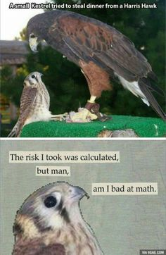 Very bad at the maths funny pics, funny gifs, funny videos, funny memes, funny jokes. LOL Pics app is for iOS, Android, iPhone, iPod, iPad, Tablet