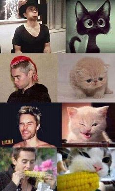 Jared Leto vs. kittens i guess The kittens win xd