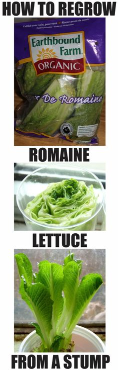 Re-grow romaine lettuce indoors.  Take stump and maintain in 1/2 inch of water for about 4 weeks, then harvest and eat!