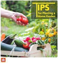 Here's How to create your own backyard vegetable garden.