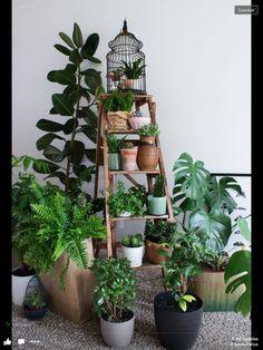 Escada suporte plantas