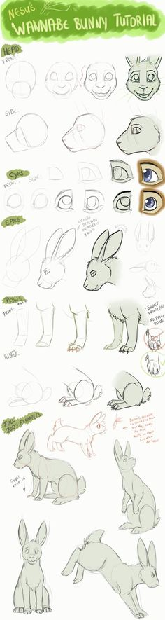 Bunny Tutorial by Nesuki.deviantart.com on @DeviantArt