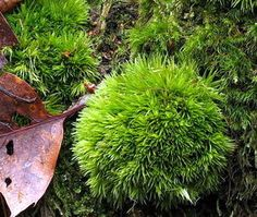 A pic of moss that is ready to be set.