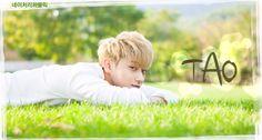 EXO M for Nature Republic: Tao
