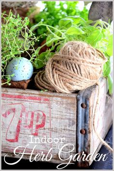 Indoor herb garden in a vintage crate
