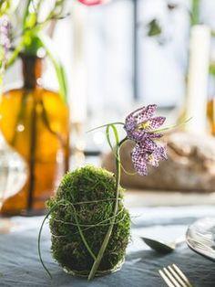 DIY: moseieren voor de paastafel Mooiwatplantendoen.nl