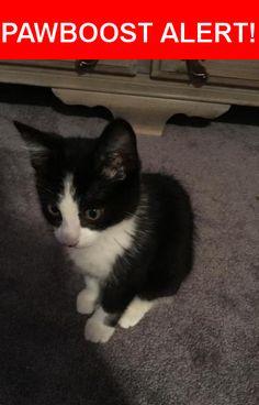 Please spread the word! Mr Pickles was last seen in Norwood, PA 19074.    Nearest Address: Near Tasker Ave & Devon Rd