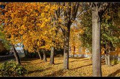 Осень в городе Дубна.(4)