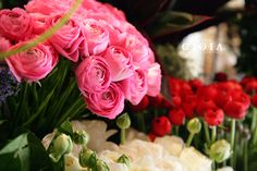 ラナンキュラス。何枚も重なり合った花びらが特徴の可愛いらしい春のお花+*.。