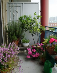 Our Balcony | Flickr - Photo Sharing!