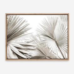Featuring an array of Dried Fan Palms, this stretched photographic canvas art print arrives ready-to-hang on your. Photo Canvas, Canvas Artwork, Artwork Prints, Framed Art Prints, Canvas Prints, Mdf Frame, Canvas Frame, Fan Palm, Artwork Design