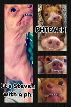 Phteven. I. Love..this. dog.