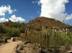 Sonoran Desert Nature Loop trail after rain storm.