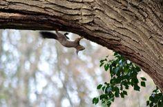 wald°sinnen: Wald°Vögel {2} oder Ein Tag in einer alten Esche Alter, Nature, Animals, Woodland Forest, Mornings, Nurseries, Animais, Naturaleza, Animales