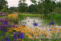 Colourful plantings surround a natural swimming pond