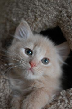 adorable kitty :)