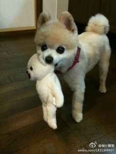 This dog looks like his teddy bear!