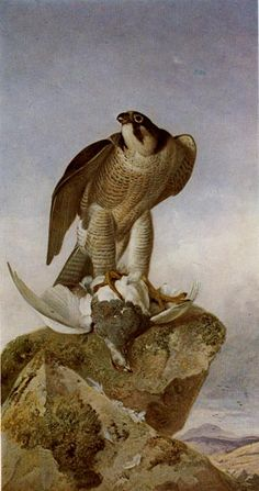 A Perigine Falcon with a Ptarmigan  Richard Ansdell, RA Oil on canvas  1868