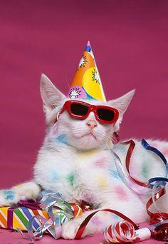 Party Like A Rockstar! :D https://www.facebook.com/dogsorcatsfans?ref=hl