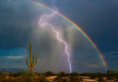 Chaos In Nature Photo Contest Winners  photo: SaguaroPictures