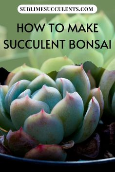 Succulents are ideal for bonsai, so if you're looking for a new project or something interesting to try with your plants, give bonsai a chance. Check out this pin for some great tips on how to make a succulent bonsai! Succulent Species, Succulent Bonsai, Succulent Planter Diy, Succulent Gardening, Succulent Care, Bonsai Plants, Succulent Arrangements, Cactus Plants, Indoor Gardening