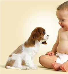 Cavalier king charles spaniel - they are so gentle with babies and children