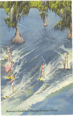 Vintage Florida Postcard - Cypress Gardens - Neptune's Daughters Water Skiing...