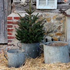 I love the rustic charm and patina on these ample sized vintage zinc buckets. I find buckets are so much easier for holiday tree display than complicated stands with tree skirts. Christmas Tree Bucket, Cowboy Christmas, Christmas Porch, Holiday Tree, Primitive Christmas, Christmas Love, Country Christmas, All Things Christmas, Vintage Christmas