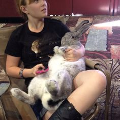 Cortana Flemish Giant Giant Bunny, Big Bunny, Cute Bunny, Bunny Rabbit, Funny Bunnies, Baby Bunnies, Cute Funny Animals, Flemish Giants, Animals And Pets