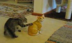 Cat fight - cinemaon.net