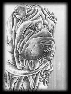 drawing of shar pei