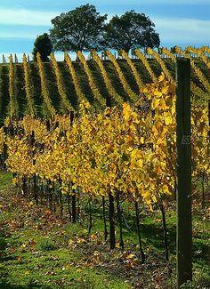 Corralitos Wine Trail an easy cruise by Santa Cruz - California