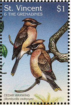 Cedar Waxwing stamps - mainly images - gallery format