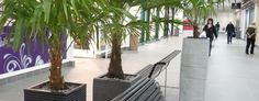 Office Plants | Displays | Interior Plants for offices Preston, Lancashire - Barton Grange Landscapes