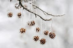 Sweet Gum tree in winter I Love Winter, Winter Day, Winter Is Coming, Woodland Christmas, Winter Christmas, Christmas Oranges, Christmas Ideas, Merry Christmas, Natural Christmas