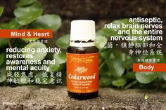 Young Living Cedarwood 北非雪松https://www.youngliving.com/signup/?isoCountryCode=US&sponsorid=1704613&enrollerid=1704613