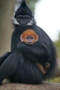 monkey face..