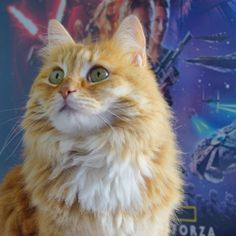 My cat (Leia) in front of my Star Wars 7 poster