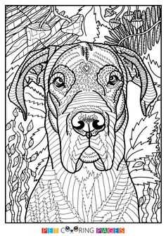 Free Printable Great Dane Coloring Page Available For Download Simple And Detailed Versions Adults