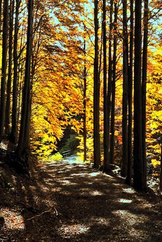 High Val Parma Forest  -  The Lagoni  Badignana valley