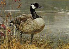 Robert bateman Pride Of Autumn Canada Goose