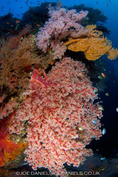 Seraya, Tulamben - Bali - Joe Daniels - Underwater Photography