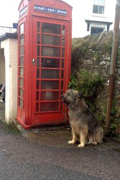 Lotta macht Urlaub in Cornwall.#Verlag #Hund #Buch #Book #dog #Cornwall #Tier #Telefonzelle #England