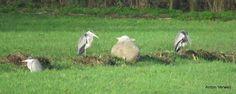De kudde en de herders ... http://godisindestilte.blogspot.com/2015/12/de-kudde-en-de-herders.html