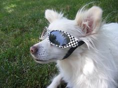 Make sunglasses for your dog for $2