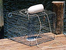 How to catch crabs Fishing Knots, Best Fishing, Kayak Fishing, Fishing Tips, Lobster Trap, Crab And Lobster, Blue Crab Trap, Blue Crabs, Crawfish Traps