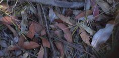 Leaf litter in the bush