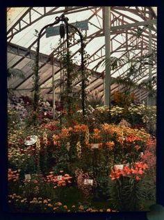 Autochrome 9x12 - Fleurs sous serre. - Antiq Photo - Photographies - [( 04. Autochromes|supprimer_numero)] - Achat, vente et estimation gratuite d'appareils photos anciens, de photographies de collection et de daguerréotypes.