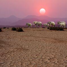 DAMARALAND SUNSET - NAMIBIA